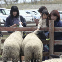 Visitors feed sheep at Iwanuma Hitsuji Park, which was built on land abandoned after the March 2011 earthquake and tsunami, in April 2019. The park has become a place for interacting with tourists. | KYODO