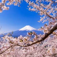 Peak Japan: Mount Fuji is seen through cherry blossom branches. A group is aiming to institute a climbing fee for the landmark as of 2022. | GETTY IMAGES