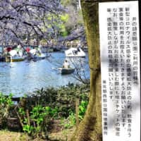 Sign of the times: Placards asking people to refrain from having drinking parties in Tokyo's Inokashira Park have been as commonplace this year as the country's iconic cherry blossoms. | YOSHIAKI MIURA