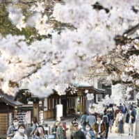 People wearing face masks view cherry blossoms at Yasukuni Shrine in Tokyo on March 22. | KYODO