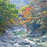 Escape plans: It's believed that the original kazurabashi (vine bridges) of Iya Valley in Shikoku were built in the 12th century by the Heike clan, who were in hiding and planned to cut the ropes if pursued by enemies. | GETTY IMAGES