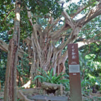 Holy ground: Utaki (sacred sites) can be found across the islands of Okinawa. This particular utaki sits in a forest in the Sashiki district of Nanjo. | ALEX MARTIN