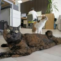 Pet owners in Japan spend ¥300,000 on dogs, ¥160,000 on cats a year