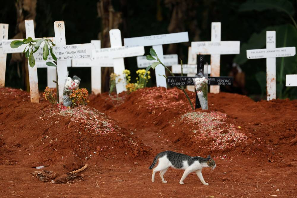 A cat is seen next to new graves at a cemetery complex provided by the government for COVID-19 victims in Jakarta on Friday.  | REUTERS