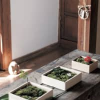 Small-scale zen: Soil and moss are laid out in small wooden boxes to create miniature gardens. Like flower arrangements, they reflect the changing seasons. 'As I'm making them, I conduct a dialogue with my inner self,' Hirota says. | SHOGO OIZUMI