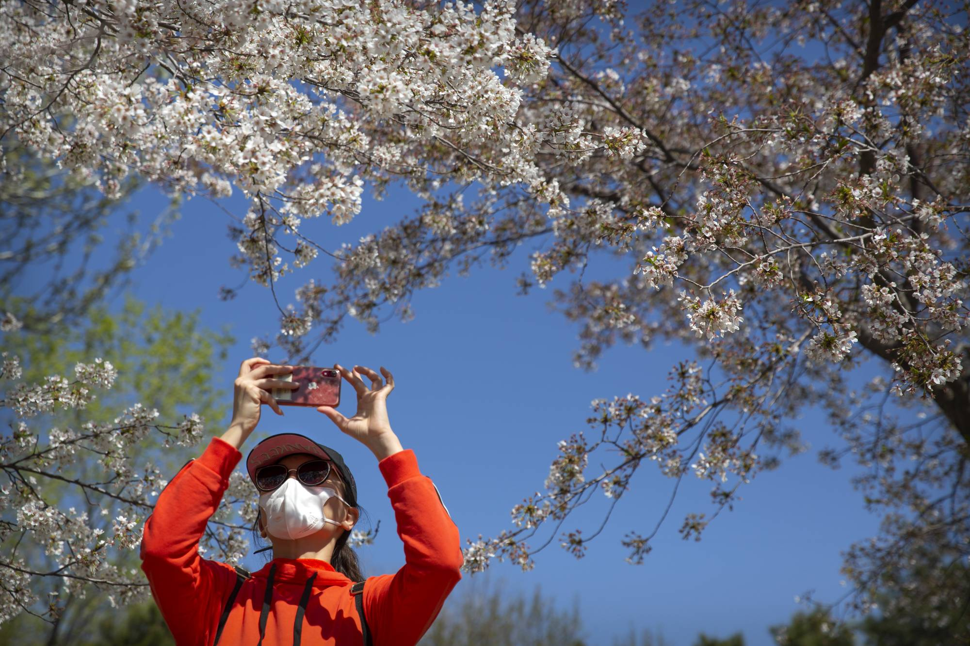 A woman takes a photo at Yuyuantan Park in Beijing on Friday. | AP