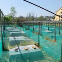 A snake farm with empty wooden slats is pictured after a ban on the trade and consumption of wildlife following the coronavirus disease outbreak, in Zisiqiao village, Zhejiang province, China on Tuesday. | REUTERS