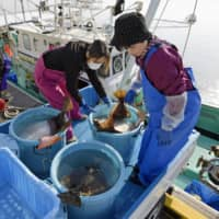 Women handle fish at the Ukedo wholesale fish market on Wednesday in the town of Namie, Fukushima Prefecture. | KYODO
