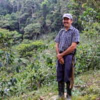 Caffeinated conservation: Colombian farmers switch coca for coffee to protect wildlife