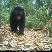 An Andean bear is photographed by a camera trap set up by the WebConserva Foundation in San Lucas, Colombia, in 2018.    WEBCONSERVA FOUNDATION / VIA REUTERS