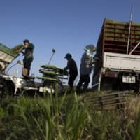 Farmers prepare rice seedlings near a paddy field in Ibaraki Prefecture. The agriculture ministry plans to encourage workers who have lost their jobs due to the coronavirus pandemic to join the farm sector.  | BLOOMBERG