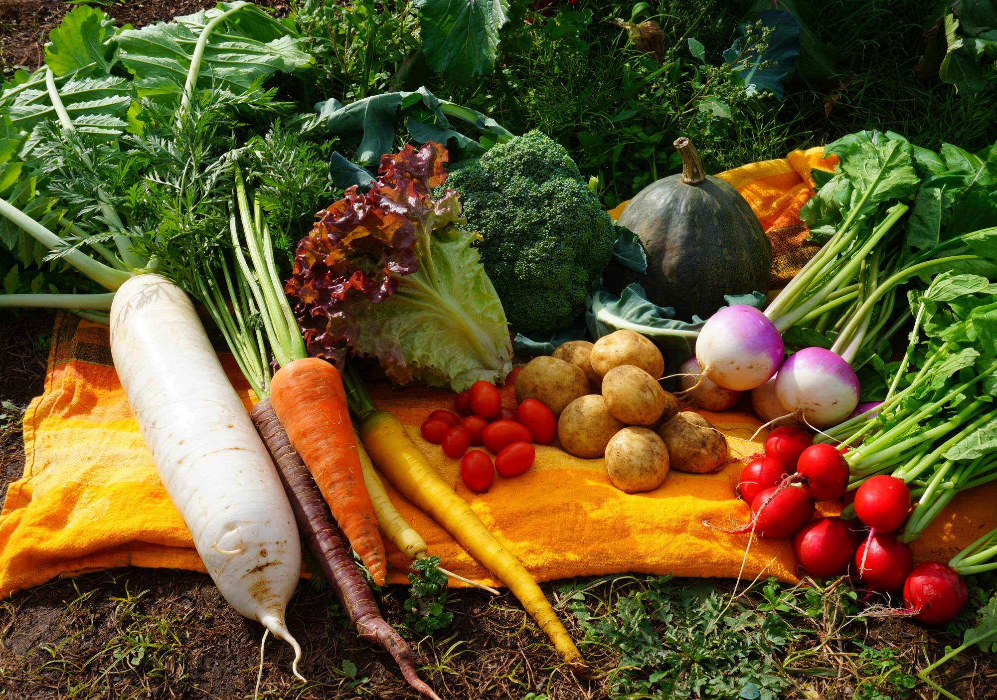Cornucopia: Getting a vegetable box delivered to your door is a great way to avoid making trips to the supermarket while also supporting local farmers.   COURTESY OF SHO FARM
