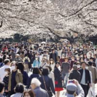Japanese couldn't resist blossoms despite pandemic, phone data shows