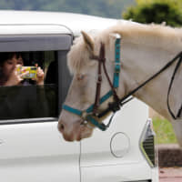 A visitor in a car takes pictures of a horse at a 'drive-thru farm' that was launched in response to the coronavirus outbreak, at Mother Farm in Futtsu, Chiba Prefecture, on Friday. | REUTERS