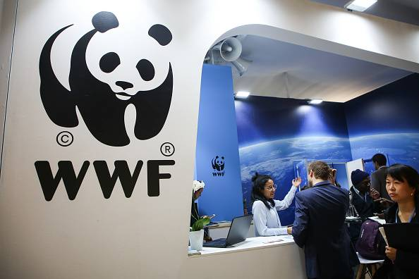 People browse a WWF booth at COP 24, the 24th Conference of the Parties to the United Nations Framework Convention on Climate Change, in Katowice, Poland, in December  2018. | GETTY IMAGES / VIA KYODO