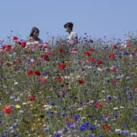 A couple enjoy the sun in park full of flowers in Milan on Monday. Italy began stirring again Monday after a two-month coronavirus shutdown.  | AP
