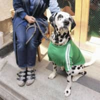 Architect Mieko Okawa enjoys some sunshine with her 4-year-old Dalmatian at their home in Tokyo. She and other pet owners in Japan are worried about what would happen if they are hospitalized or have to enter quarantine. | KYODO