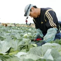Japan's new labor visas fall far short of goal for first year