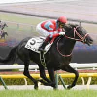 Undefeated Contrail jets to Japanese Derby victory
