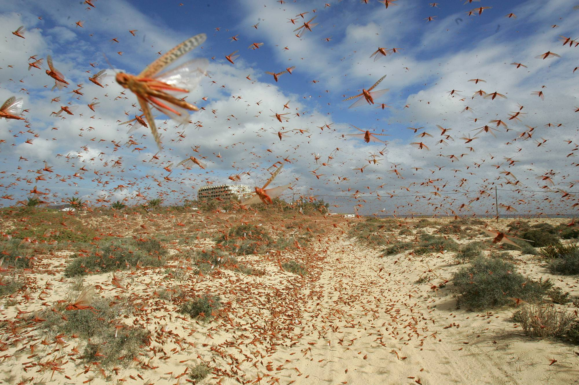 The Climate Prediction and Application Center in Nairobi says locusts are 'invading the Eastern Africa region in exceptionally large swarms like never seen before.' | REUTERS