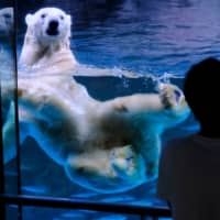 A visitor looks at a polar bear swimming in an aquarium at the Hakkeijima Sea Paradise theme park in Yokohama on Tuesday. The park was reopened Monday after about two months of closure over concerns about the spread of the novel coronavirus. | AFP-JIJI