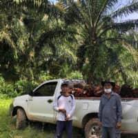 A Malaysian palm oil farmer and worker at a farm in Sarawak last month. Palm oil production was already expected to drop by as much as 10 percent due to last year's dry weather and less aggressive fertilization. Now, the labor shortage due to the coronavirus outbreak suggests the shortfall could more than double. | INCHAM SERDIN / VIA REUTERS