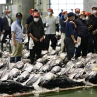 Bluefin tuna are lined up for auction in Sakaiminato, Tottori Prefecture, on Friday. | KYODO