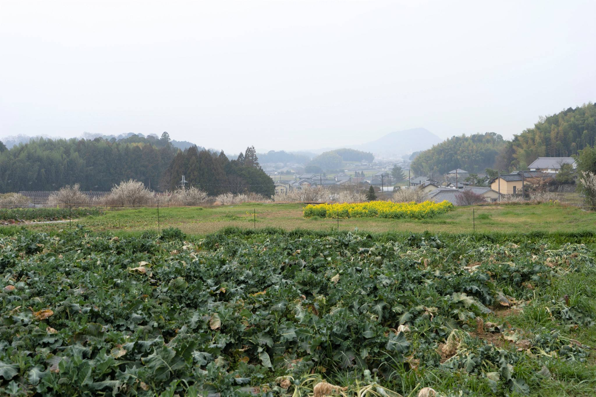 The small village of Asuka, Nara Prefecture, is known for its many ancient mounded tombs. | KYODO