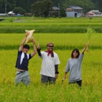 Farmers in Hida, Gifu Prefecture, are said to find themselves too busy with growing their rice to focus on the marketing of their product. | COURTESY OF HIDA CITY / VIA KYODO