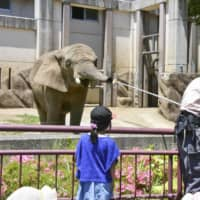 Elephant goes on diet with help from Morioka Zoo visitors