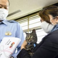 Clever cat wins police plaudits in Japan for leading to rescue of man stuck in canal
