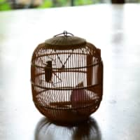 Musical insect: The singing of the long-horned grasshopper is a pleasing sound that evokes summer. Kept in a cage and fed on onion scraps, the insect can chirp away for a whole month. | MITSUHIKO IMAMORI