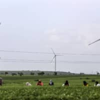 Many of the world's largest publicly held solar and wind companies are failing to meet widely accepted human rights benchmarks. | BLOOMBERG