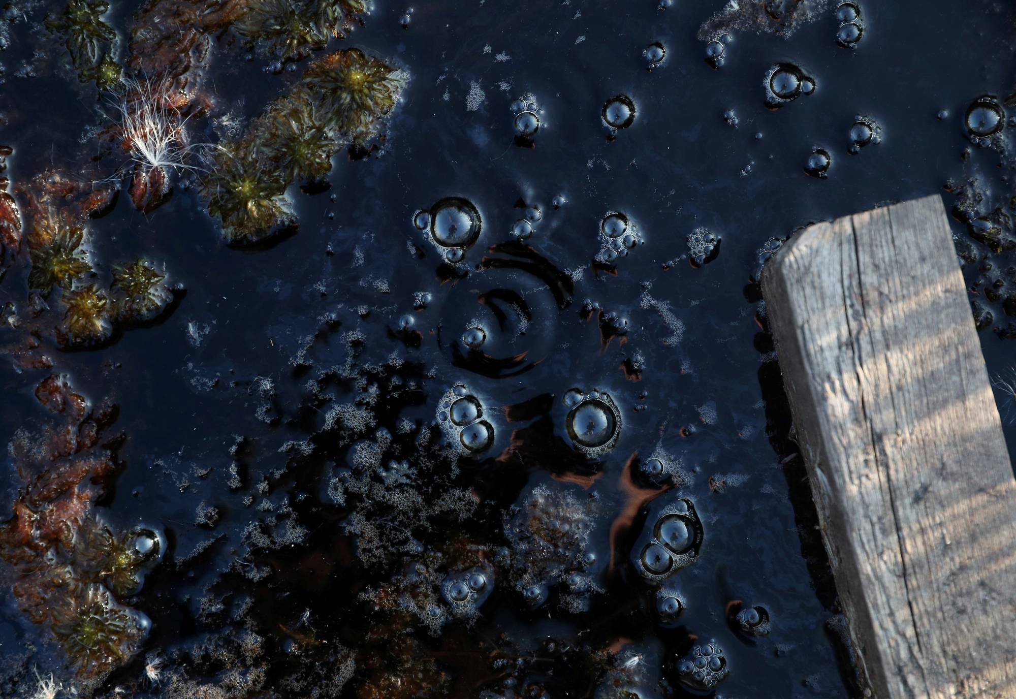 Methane bubbles are seen in an area of marshland at a research post at Stordalen Mire near Abisko, Sweden, in August last year. | REUTERS