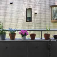 Urban greenery: The author's concrete balcony is now home to a selection of colorful potted flowers. | REBECCA SAUNDERS