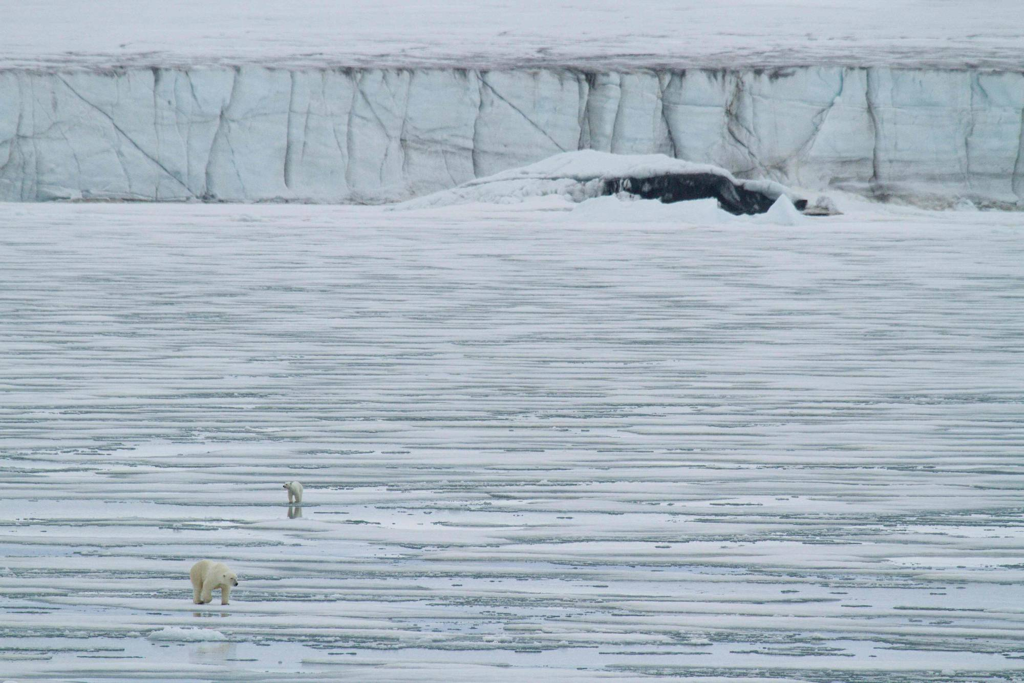 A polar bear and its cub walk across sea ice in front of a glacier in Svalbard, Norway, in 2012.    POLAR BEARS INTERNATIONAL / VIA AFP-JIJI