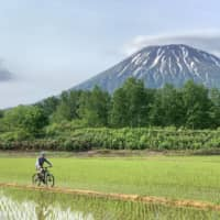 A cyclist on a trail with Mount Yotei in the background. Niseko hosts a variety of competitions and is home to an array of trails for various skill levels.