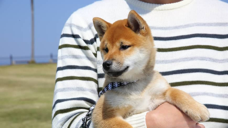 Japan confirms first cases of COVID-19 in pets as two dogs test positive