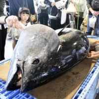 Miyagi firm first to get sustainable label for bluefin tuna fishing