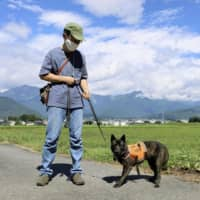 'Monkey dogs' and tech keep crop-eating simians at bay in Nagano