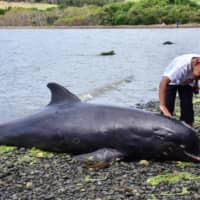 18 whales die in Mauritius stranding