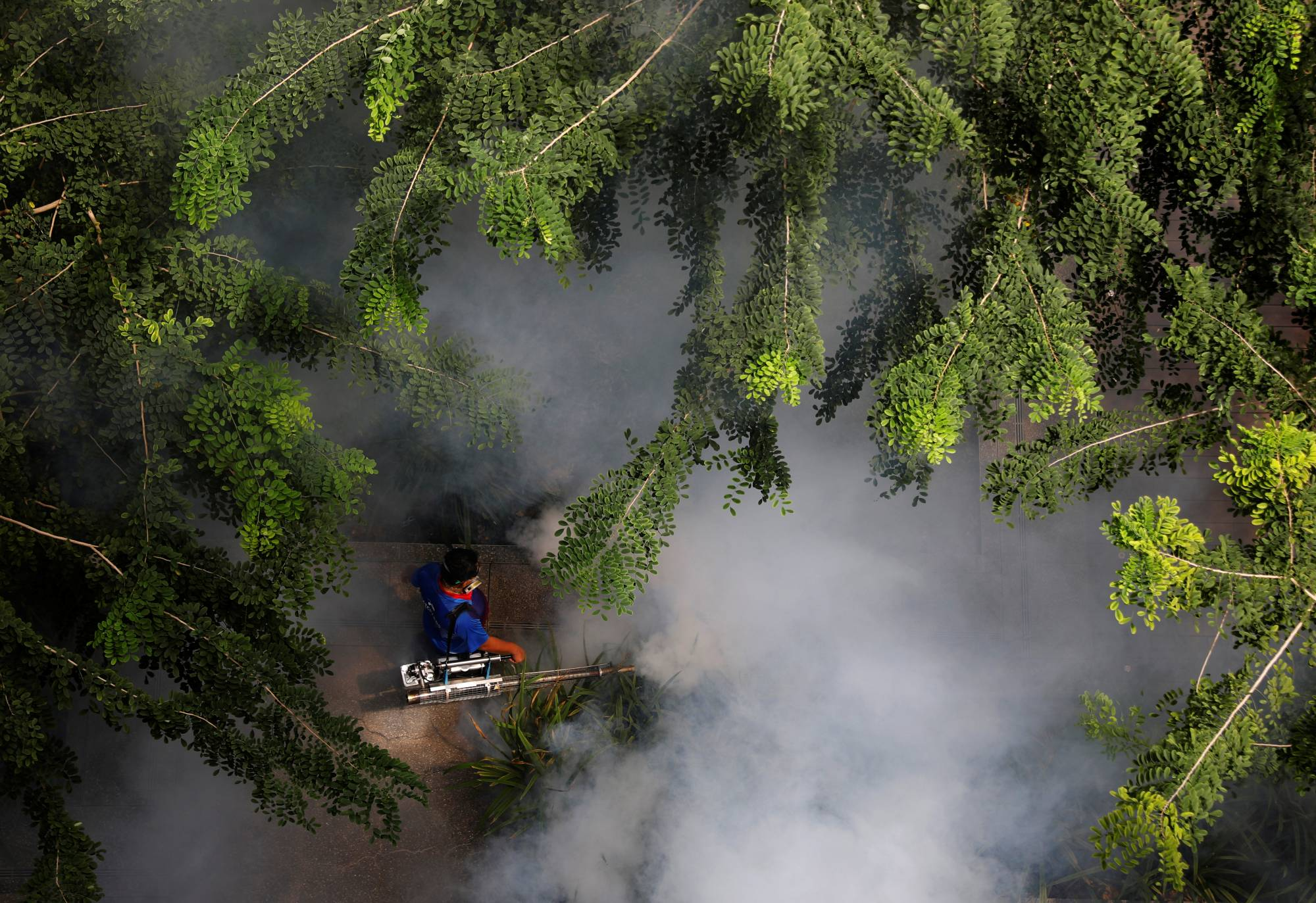 A worker fogs a housing estate for mosquitoes in Singapore.  | REUTERS