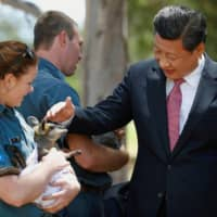 Chinese President Xi Jinping pats a swamp wallaby on the grounds of Government House in Canberra in 2014.  | REUTERS