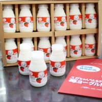 Strawberry yogurt with a package featuring an illustration of Chief Cabinet Secretary Yoshihide Suga, the son of a strawberry farmer, are sold in Akita Prefecture. | KYODO