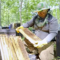 Mobile honey-making tradition lives on in Japan