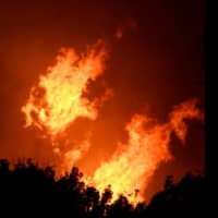 Fierce, frequent climate-fueled wildfires may decimate forests worldwide