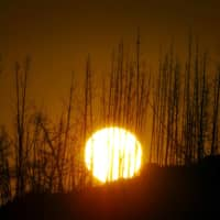 The rising sun is obscured by a row of dead pine trees that was once part a commercial plantation on Mount Stromlo, on Canberra's western outskirts, in 2004.    REUTERS