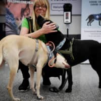 Sniffer dogs have been employed in Finland to help detect traces of the coronavirus on travelers.  | ANTTI AIMO-KOIVISTO / LEHTIKUVA / AFP-JIJI