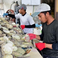 Oyster firms suffer as travel ban exposes reliance on foreign trainees