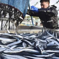 Japanese seafood industry taps AI for fish selection